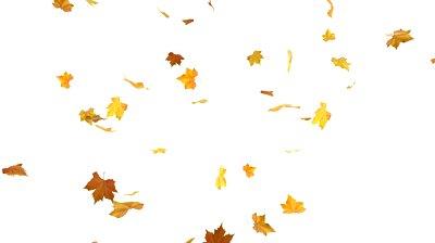 Resultado de imagem para autumn leaves falling