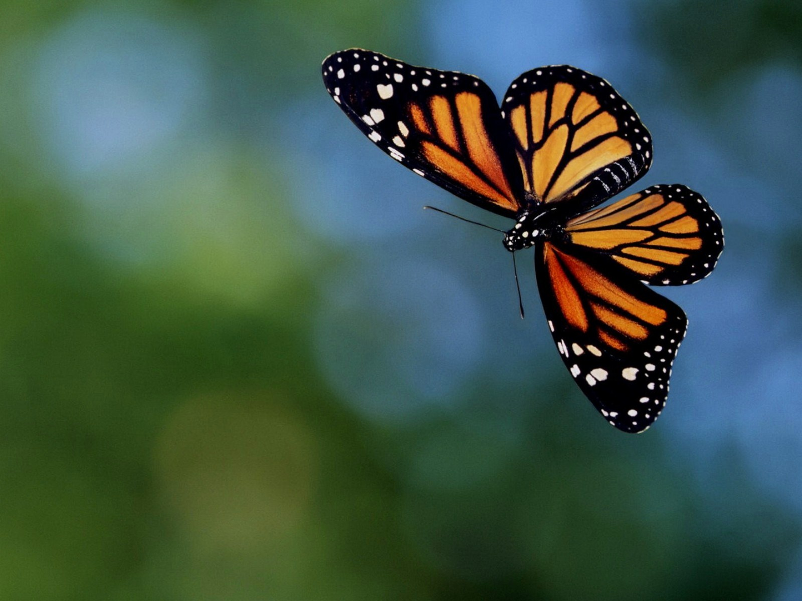 free pictures of butterflies flying away